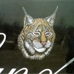 lynx-etching